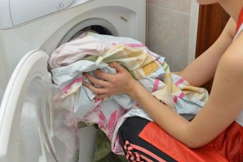 ペット 洗濯