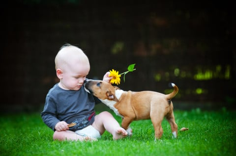遊ぶ 子ども 赤ちゃん ペット 犬