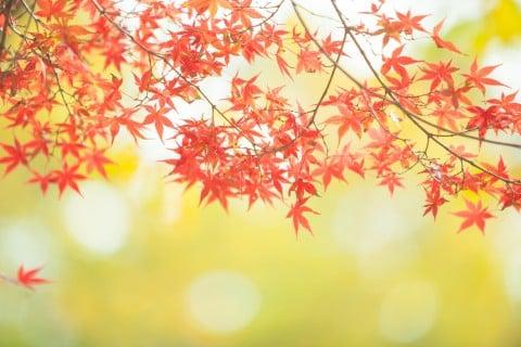 風景 もみじ 秋