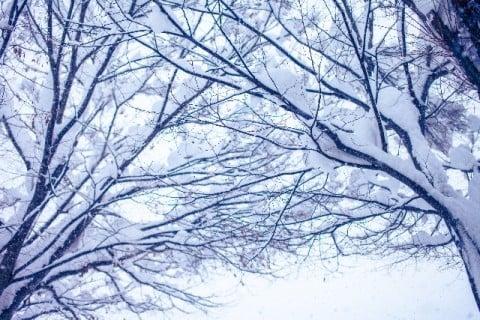 風景 雪 木 冬