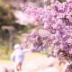 風景 花 紫 木