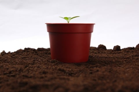 風景 鉢植え 芽生え