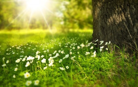 風景 太陽 自然