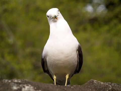 動物 鳥 疑問