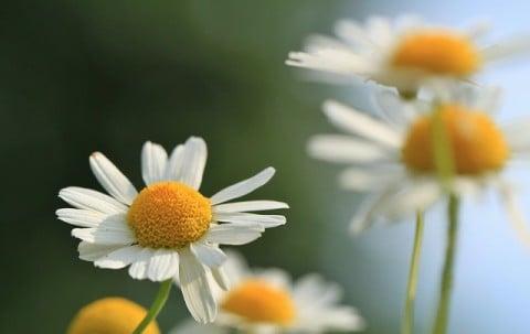 風景 花 リラックス