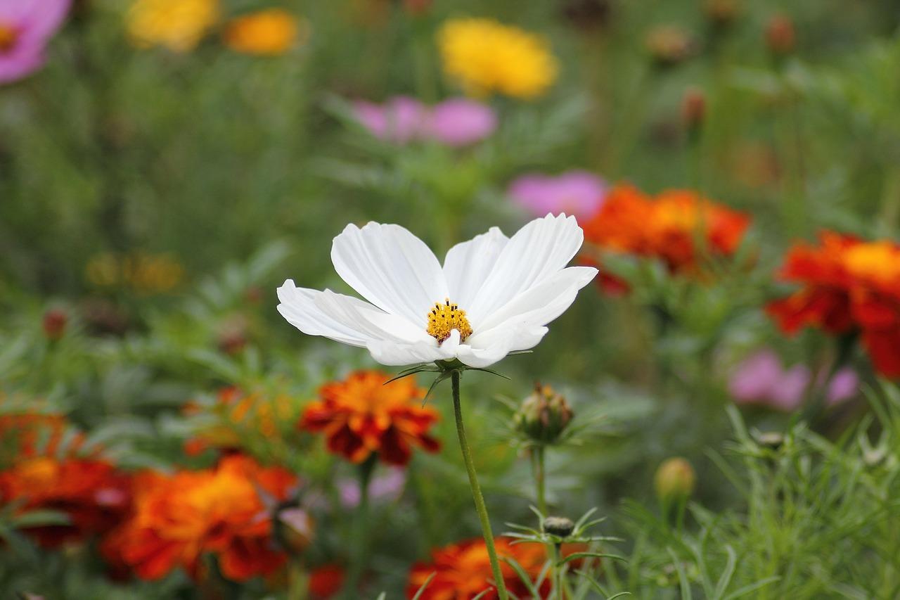 風景 花 自然