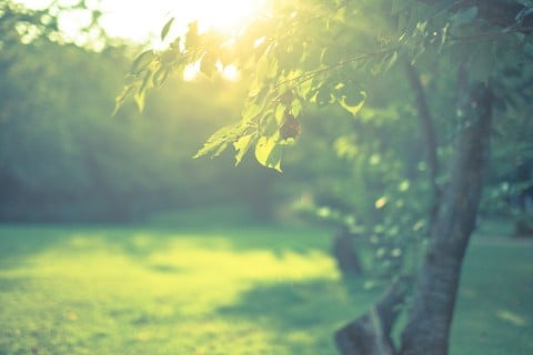 風景 自然 光