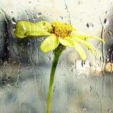 風景 雨 花