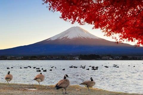 日本 富士山 風景 紅葉