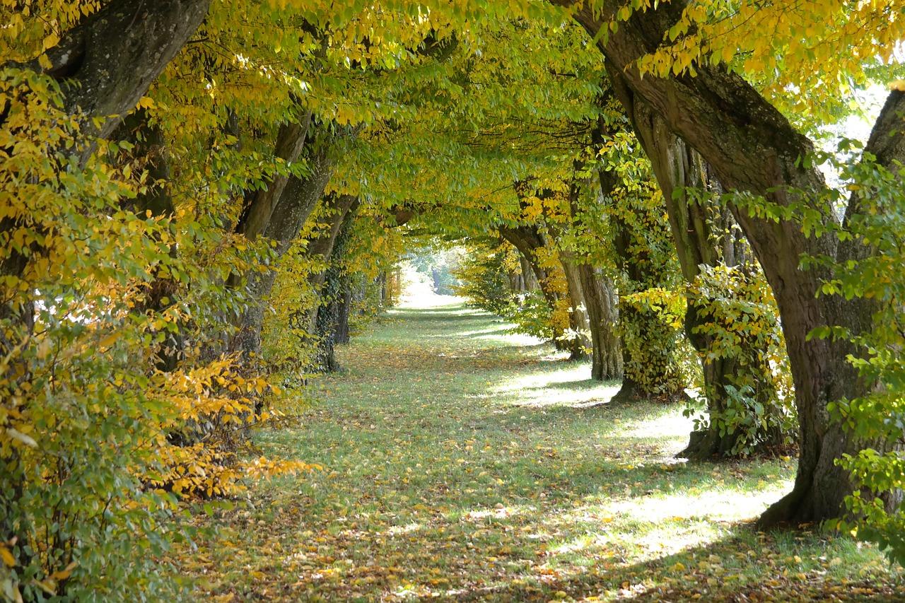 通り 秋 公園