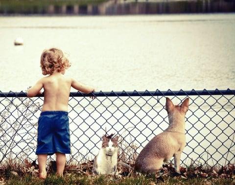 風景 子供 動物 犬 猫