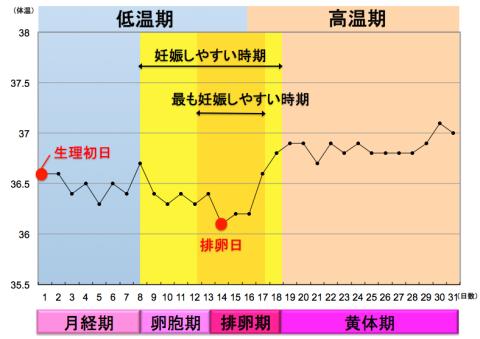 排卵周期 基礎体温グラフ
