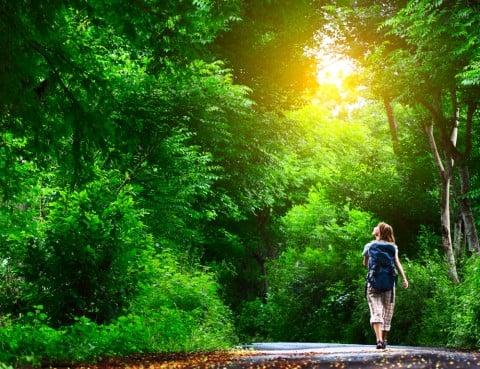 女性 散歩 ウォーキング 森