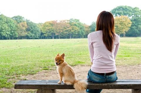 女性 公園 犬 散歩 草原