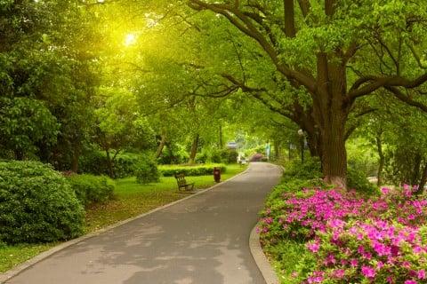 風景 公園