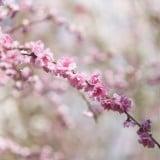 桜 春 卒園