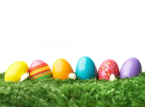 卵 色々 種類 違い