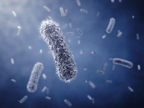 菌 ウイルス 細菌 病気 病原菌