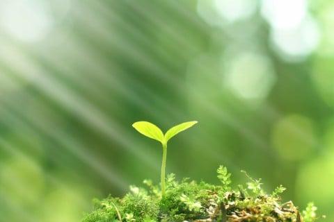 芽生え 若葉 植物 物 モノ