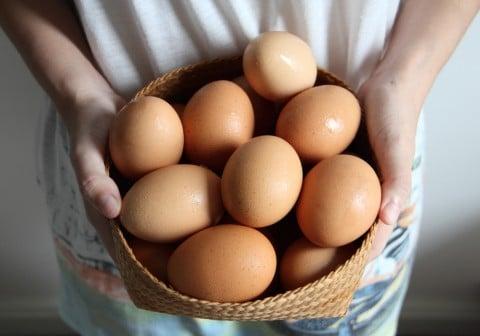 生卵 女性 卵 ざる