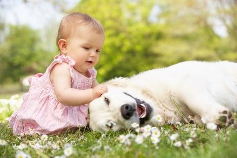 赤ちゃん 座る ペット 犬 外出