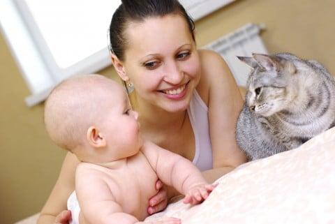赤ちゃん ママ 猫 ペット