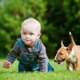 赤ちゃん 犬 外 野外 公園 遊ぶ