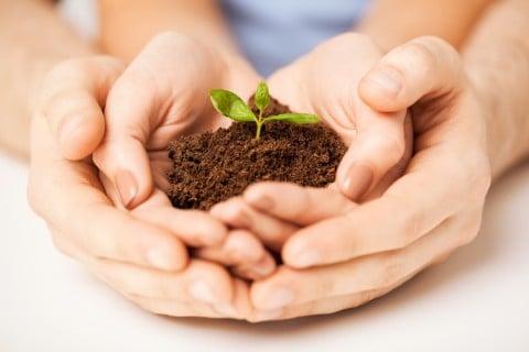 もの モノ 芽 成長 植物 夫婦 子供 芽生え 発達