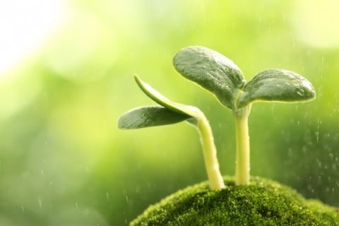 芽 芽生え 成長 受精 生命 発展 発達 希望