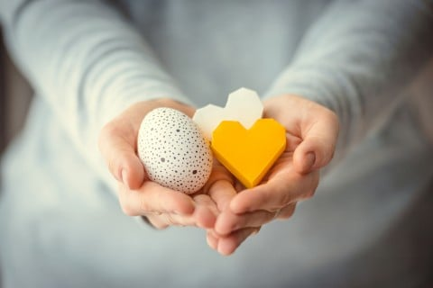 卵 卵子提供 ハート