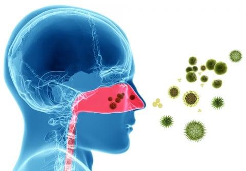 アレルギー 鼻炎 花粉 ハウスダスト ウイルス