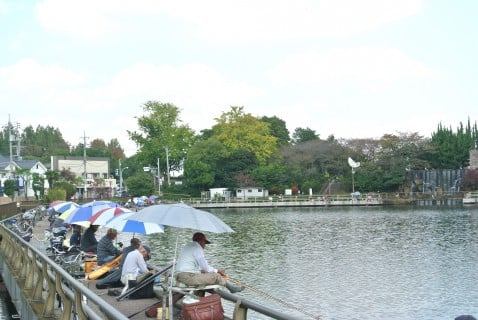 水元公園 釣り