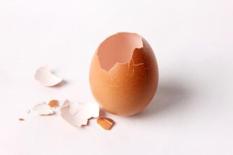 卵 殻 空っぽ 無し モノ