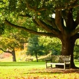 公園 広場 風景 リラックス