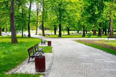 公園 グリーン 風景 リラックス ベンチ 森林 緑
