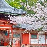 神社 桜 お宮参り 春