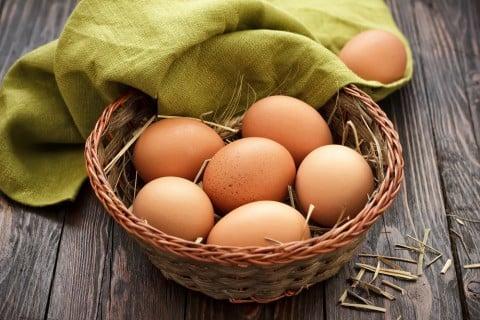 卵 ニワトリ 鶏 食事 食べ物