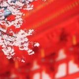 お宮参り 神社 桜