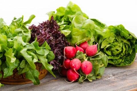 レタス 葉物 ほうれん草 ラディッシュ 葉酸 野菜 ヘルシー