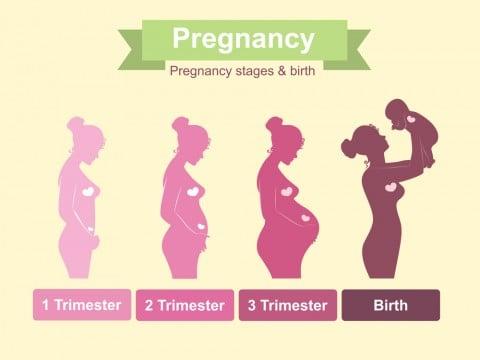 妊娠中のお腹の出方は、男の子と...