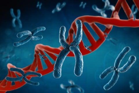 染色体 遺伝子