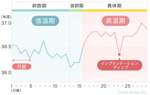 【740px】基礎体温表 ⑦高温期に体温が低下する(インプランテーション・ディップ)