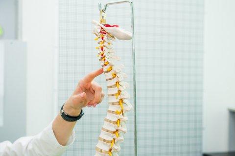 脊椎 脊髄 骨 骨格
