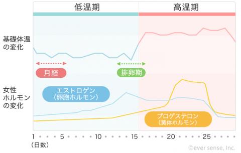 【740px】女性ホルモン 基礎体温表