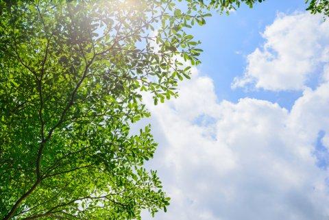 夏 空 木 雲 太陽