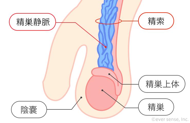 しこり 睾丸