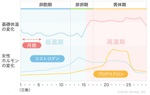 基礎体温表 グラフ 女性ホルモン 卵胞期