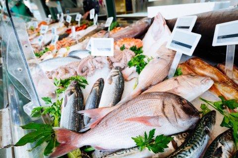魚 鮮魚 魚屋