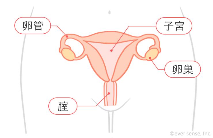 痛み 腹部 右 女性 下