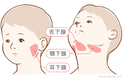 おたふく風邪 流行性耳下腺炎 顎下腺 舌下腺